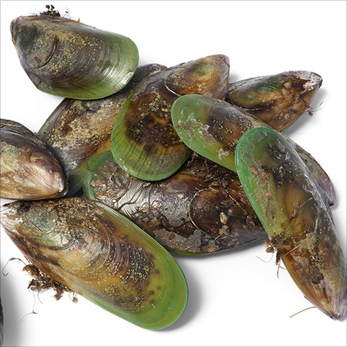 Green-Lip-mussel
