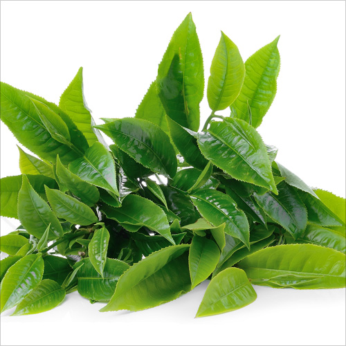 Green-Tea-Extracts
